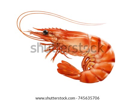 Red cooked prawn or tiger shrimp isolated on white background as package design element #745635706