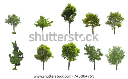Tree isolated on white background. The tree is took from around national park area and then die cutting.Can be use to garden design or interior design or any content involve tree. #745804753