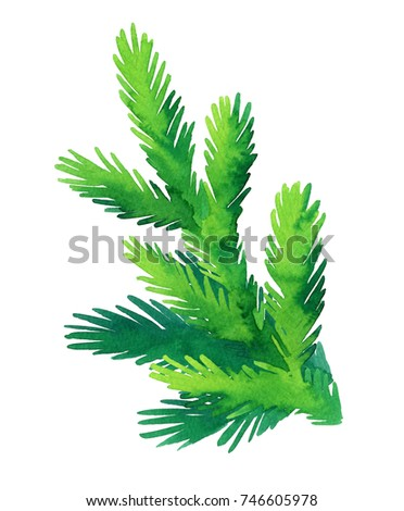 Fir branch isolated on white background. Hand drawn watercolor illustration. Christmas tree. New year and Xmas Holidays design. #746605978