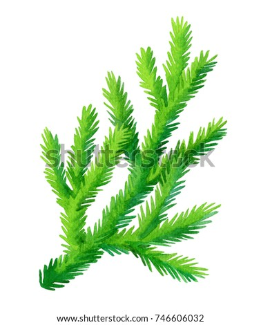 Fir branch isolated on white background. Hand drawn watercolor illustration. Christmas tree. New year and Xmas Holidays design. #746606032