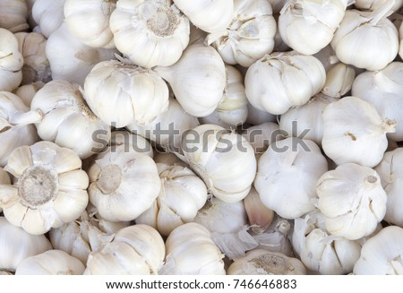 White garlic pile texture. Fresh garlic on market table closeup photo. Vitamin healthy food spice image. Spicy cooking ingredient picture. Pile of white garlic heads. White garlic head heap top view #746646883