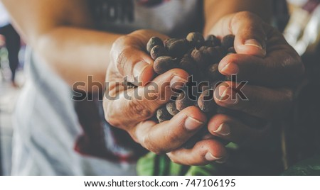 Hands holding scoop of coffee beans Not peeled Autumn harvest and healthy organic food concept Toned picture Farm Agricultural products #747106195
