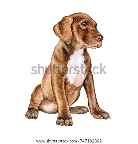 Pit bull puppy is brown. Chocolate dog isolated on white background. Watercolor. Illustration. Template. Handmade. Clip Art