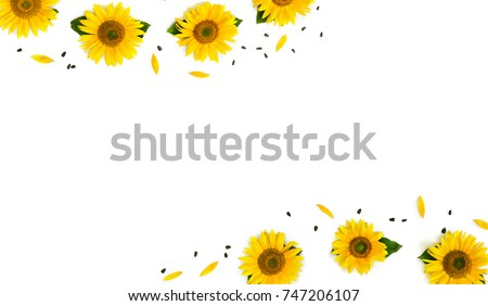 Frame of flowers sunflower (Helianthus annuus) with leaves, petals and seed on white background with space for text. Top view, flat lay.