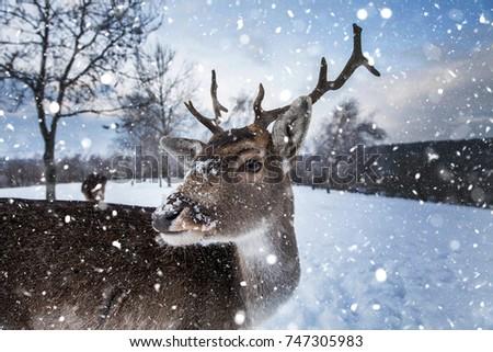 Whitetail deer in heavy winter. #747305983