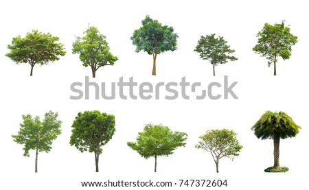 Tree isolated on white background. The tree is took from around national park area and then die cutting.Can be use to garden design or interior design or any content involve tree. #747372604