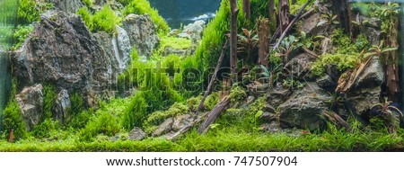 close up image of forest in nature style aquarium tank with a variety of aquatic plants inside