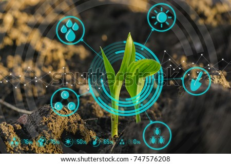 Growing young maize seedling in cultivated agricultural farm field with modern technology concepts Royalty-Free Stock Photo #747576208