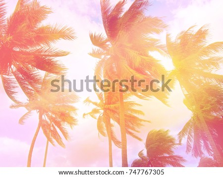 Toned palm trees background #747767305