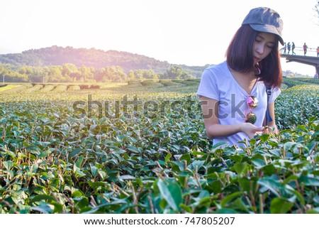 The girl walks in the tea farm,Young girls walk or play in the green tea farm. #747805207