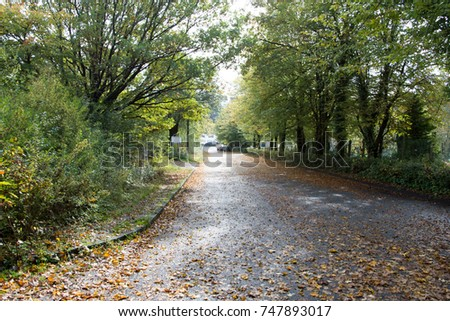 Autumn season, street with golden leaves laying on it #747893017