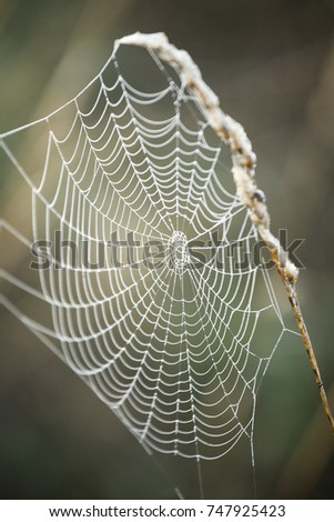 Spider web in the morning landscape during Indian summer. #747925423