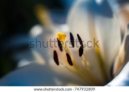 Macro shot of flower. Nature background photography. #747932809