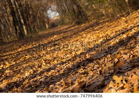 Autumn Path #747996406