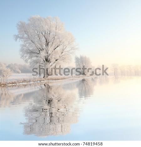 Frosty winter tree illuminated by the rising sun. Royalty-Free Stock Photo #74819458