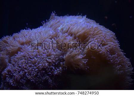 Glowing algae (seaweed) in aquarium #748274950