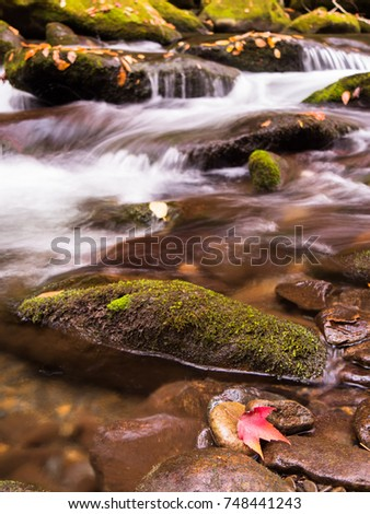 Single red maple leaf on wet rocks in flowing stream with moss-covered rocks #748441243