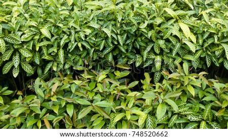 Leaf green background Refreshing nature Small leaf garden #748520662