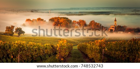 Sunset landscape and smog in bordeaux wineyard france, europe Royalty-Free Stock Photo #748532743