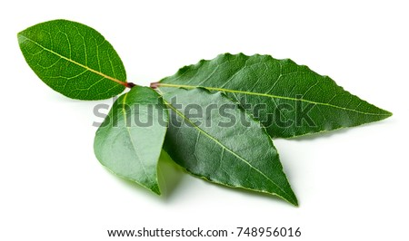 Bay leaves isolated on white background #748956016