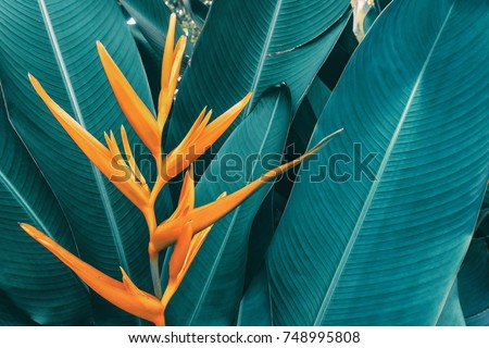 exotic flower, tropical foliage nature dark green background, vintage tone #748995808
