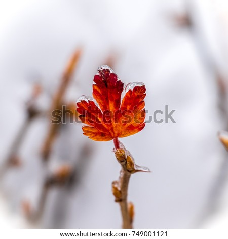 the last leaf #749001121
