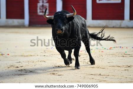 bull #749006905