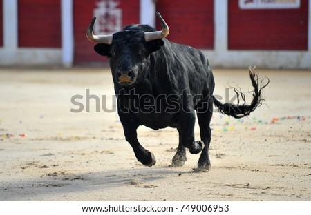 bull #749006953