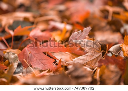 Bright orange fall leaf on ground during Autumn. Selective focus with copy space. #749089702