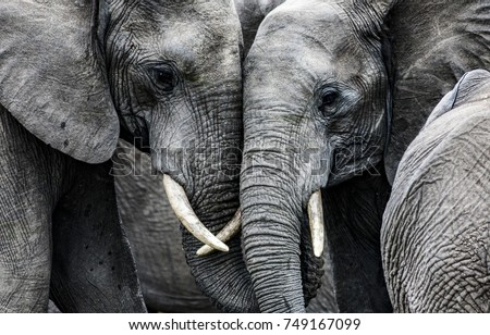 Elephants Royalty-Free Stock Photo #749167099