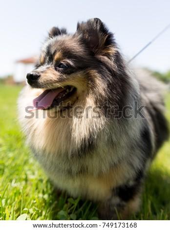 a portrait of a thoroughbred dog #749173168