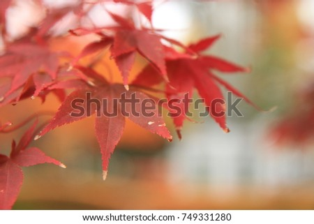 Red maple tree and leaves #749331280