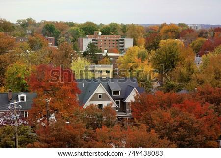 Bethesda, MD - November 5, 2017: Fall foliage peaks in a neighborhood in Montgomery County.  #749438083