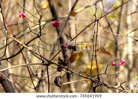 Tree branches with small pink flowers in the fall #749641909