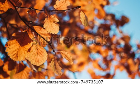 Autumn leaves with bokeh #749735107