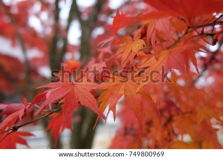 Autumn is coming #749800969