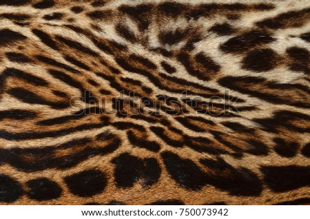feline fur background #750073942
