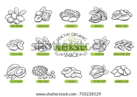 Set vector icons hand drawn nuts and seeds. Cola nut, pumpkin seed, peanut and sunflower seeds. Pistachio, cashew, coconut, hazelnut and macadamia. Illustration in sketch retro style. Royalty-Free Stock Photo #750228529