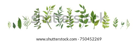 Vector designer elements set collection of green forest fern, tropical green eucalyptus greenery art foliage natural leaves herbs in watercolor style. Decorative beauty elegant illustration for design Royalty-Free Stock Photo #750452269