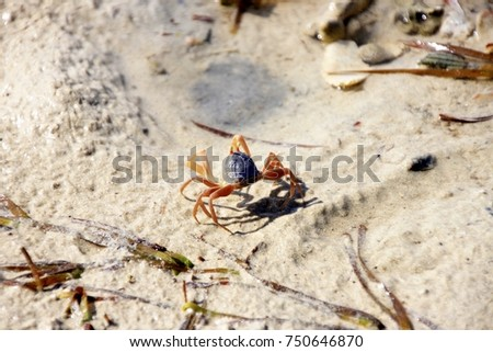 Red crab in Thailand on the beach #750646870