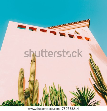 Minimal art. Tropical mood. Tropical location. Cacti and greens on pink