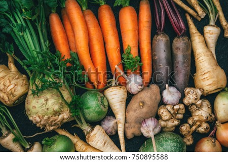 Root crops, carrots, parsley root, turnip, onion, garlic, Jerusalem artichoke, horseradish. Root crops background. Food background #750895588
