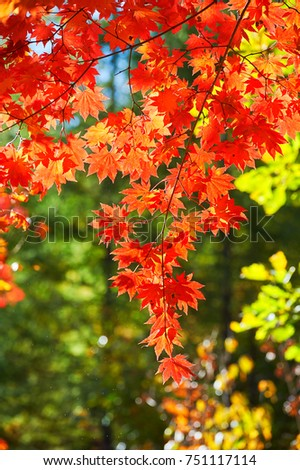 the scenery of colorful leaves in autumn #751117114