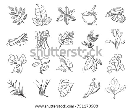 Vintage hand drawn herbs and spices, sketch drawing plants collection. Nature ingredient herbs, organic botanical aroma herbs illustration #751170508