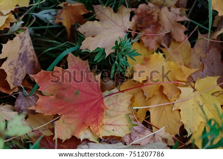 red, yellow and orange autumn leaves fall background #751207786