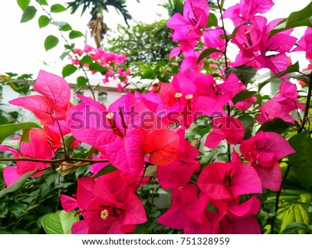 Pink Flower, Fence, Nature View #751328959