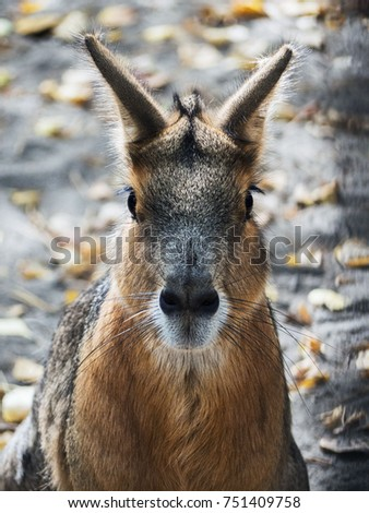 The portrait of a wild hare is very close. You can see everything in small details. #751409758