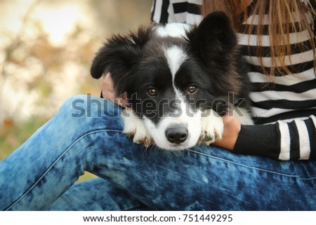 A portrait picture of a cuddly cute border collie puppy. He is happy to be with its owner.