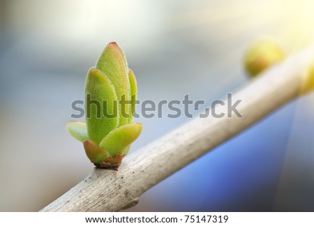 Spring bud. Composition of nature. #75147319