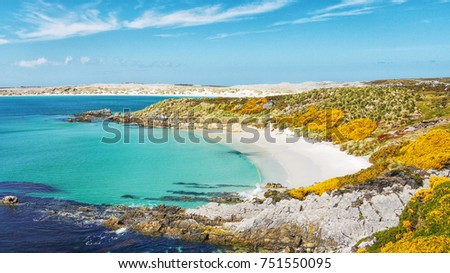 View of beautiful Gypsy Cove landscape, white sand beach, turquoise water and yellow gorse, on East Falkland Island at Stanley Common.   #751550095